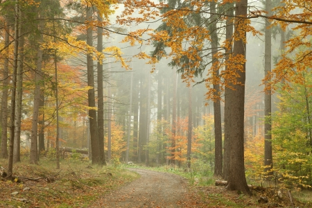 sprinftime: Forest trail in the mountains on a misty Octobers morning