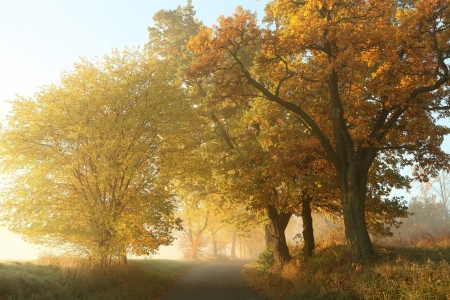 autumn path: Rural landscape on a misty autumn morning