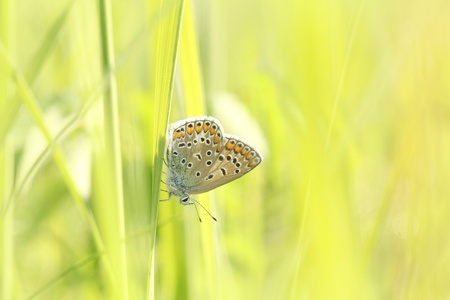 Closeup of a butterfly in spring meadow Stock Photo - 16691275