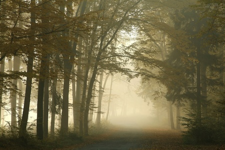 Picturesque autumnal forest on a foggy morning with the sunlight falling on rural lane photo