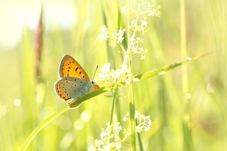 Close-up of butterfly in the grass in the morning photo