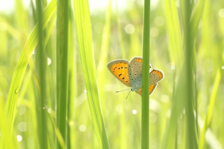 Close-up of butterfly in the grass in the morning Stock Photo - 20461039