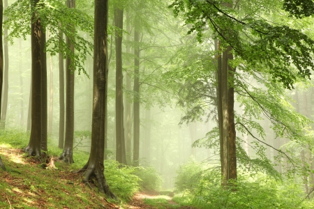 Mistige bos na de regen in de zon Stockfoto