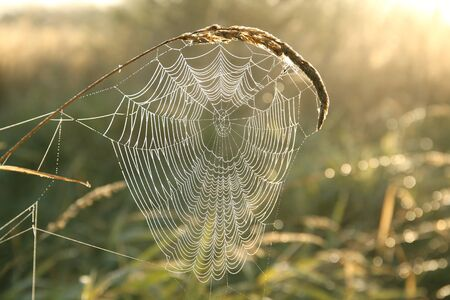 cobweb: Spider web covered with dew in the morning Stock Photo