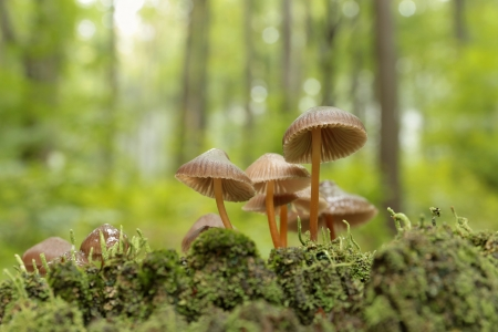Mushrooms on a rotten tree on the forest background