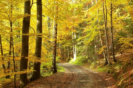 autumn path: Pathway through the woods on a sunny autumn morning Stock Photo
