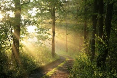 Onverharde weg door loofbos op een mistige ochtend