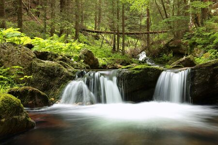 Stream flowing through the forest from the mountains photo