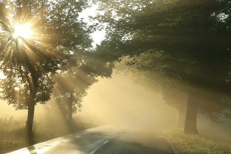 Country road on a misty morning photo