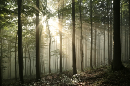 Sunrise in the early autumn deciduous forest