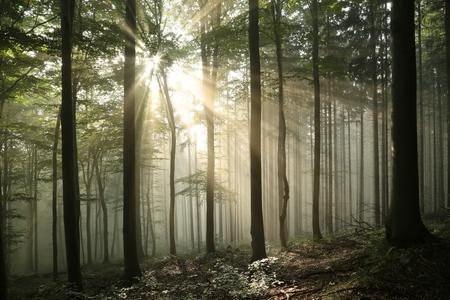 이른 가을 낙엽 숲에서 일출