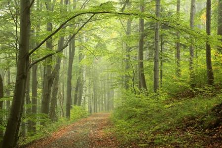 Path through misty autumn forest Foto de archivo