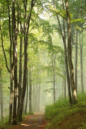 Path through misty autumn forest in the sunshine