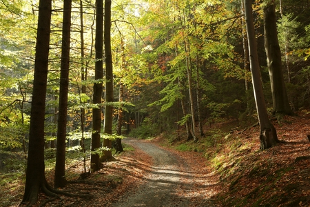 alder tree: Trail through the picturesque autumn forest Stock Photo
