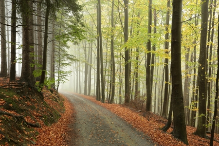Picturesque autumnal forest in the mist photo