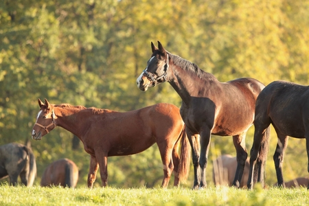 Horse in the meadow on a background of autumn trees photo