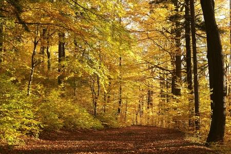 Path through autumn forest before dusk