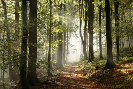 mystery woods: Autumnal forest in the mountains with mist in the distance