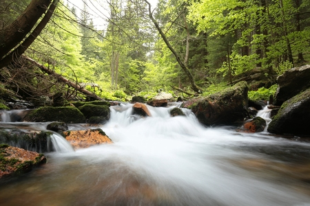 forest stream: Forest stream flowing through the forest in the valley