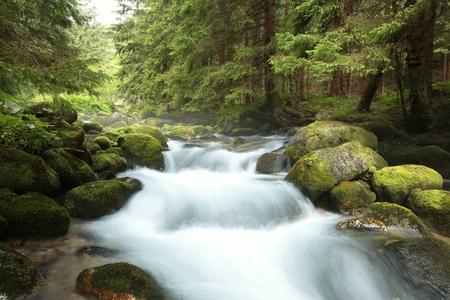 森林ストリーム。カルパチア山脈、タトラ国立公園