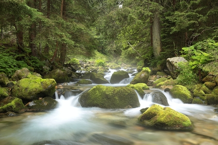 woodland scenery: Forest stream flowing from the mountains