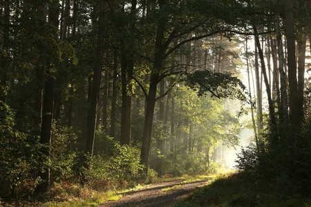 trees forest: Trail through the autumnal forest on a foggy morning Stock Photo