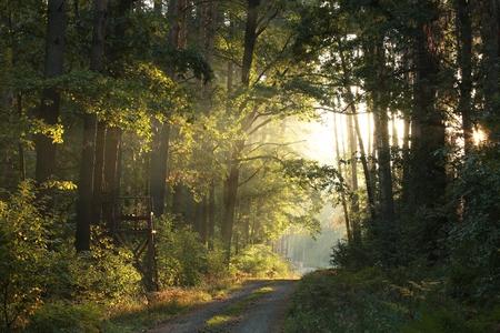 Weg door het herfstbos bij dageraad Stockfoto