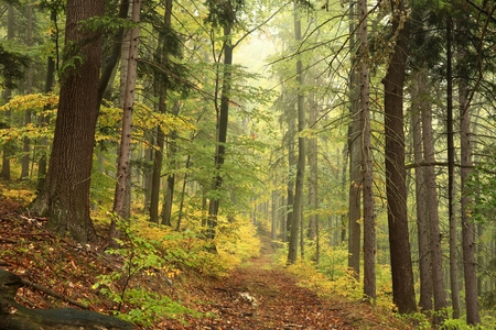 hiking path: Forest trail in autumn scenery in early October Stock Photo