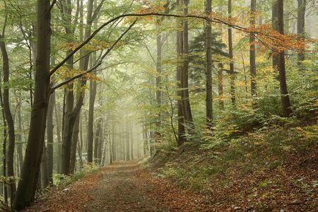 deciduous woodland: Autumn forest in the fog after a light snowfall