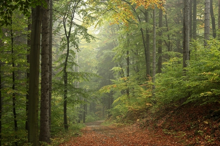 Path through the enchanted autumn forest