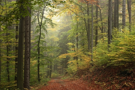 The trail through the autumnal forest