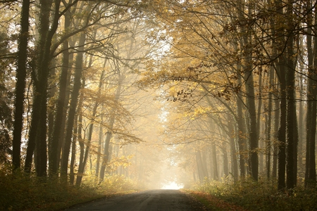 mysteries: Country road in foggy autumn morning Stock Photo