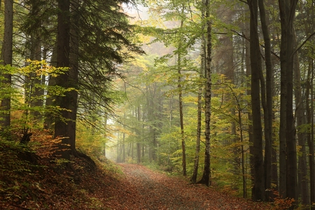 autumn path: Path through the autumnal forest in foggy weather Stock Photo