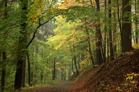 autumn path: Path through the enchanted autumn forest