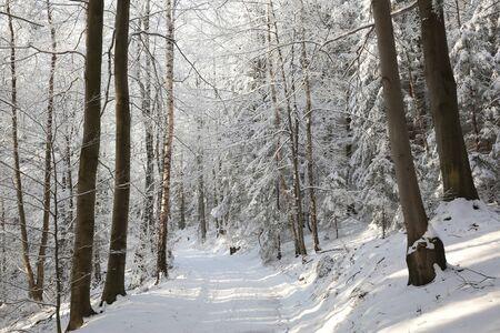 Percorso attraverso la foresta in una soleggiata mattina d'inverno