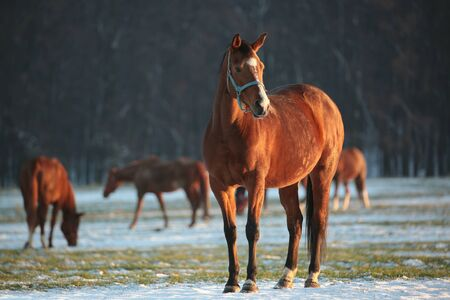 autumn horse: Horse in a snowy pasture at dusk