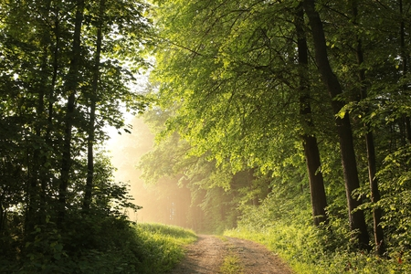 Spring forest on a foggy morning Standard-Bild