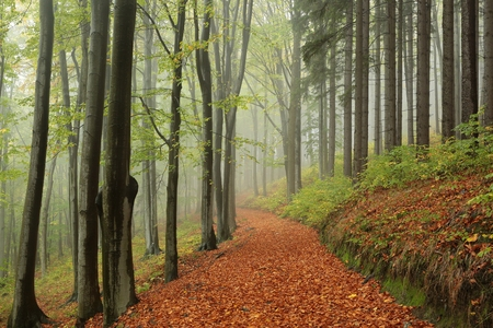 autumn path: Path through the autumn forest on a misty day Stock Photo