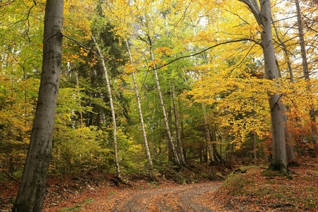 Path through the autumn forest Stock Photo