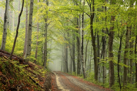 Path through the autumn forest on a misty day Stock Photo