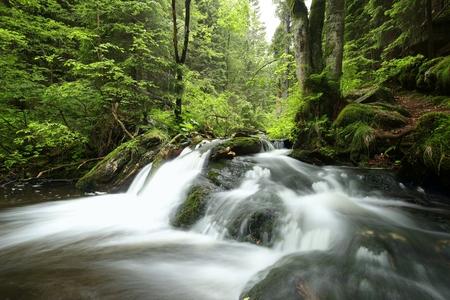 낙엽 활엽 숲을 통해 흐르는 물줄기