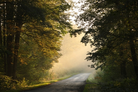 Country road through an autumn forest at dawn Stock Photo