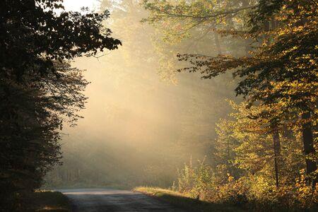 Foresta decidua autunnale in una soleggiata mattinata nebbiosa