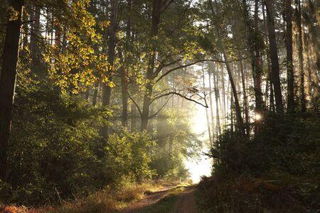 Sentiero attraverso una foresta autunnale in una nebbiosa mattina di sole