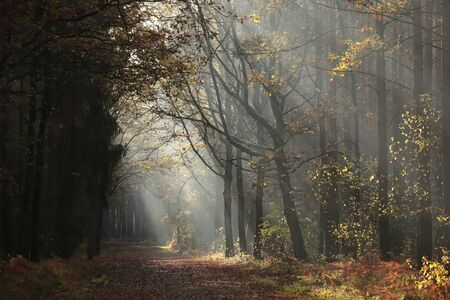 A path among oaks through the forest on a late autumn morning