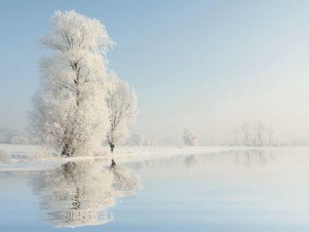 Albero d'inverno gelido al mattino Archivio Fotografico