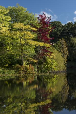 The lake in Botanical Gardens, Copenhagen, Denmark