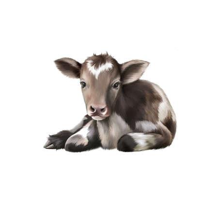 cud: Newborn Calf