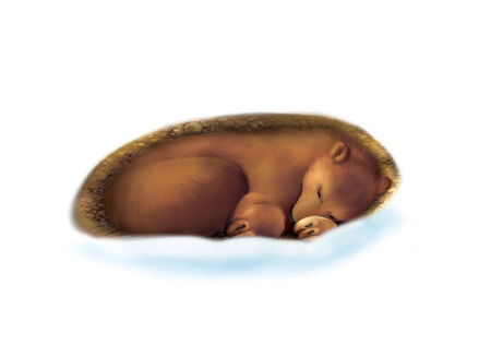sleepiness: Bear wallowing, stretching and sleeping in a cave in snow. Winter. Illustration isolated on white background. Stock Photo