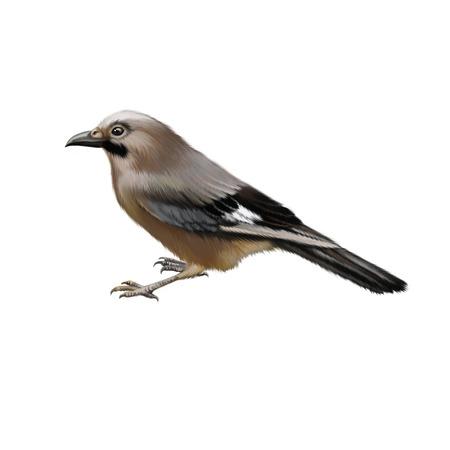 Bird sideview illustartion isolated on white background photo